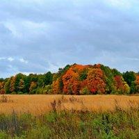 Подмосковная осень :: Геннадий