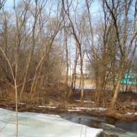 Spring in Lėvuo river :: silvestras gaiziunas gaiziunas