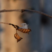Летучий голандец :: Виталий Россия