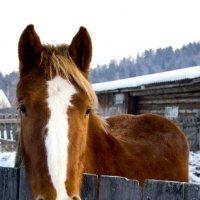 Конь :: Алексей Екимовских