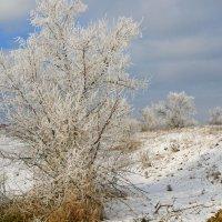 морозным утром :: Андрей Козлов