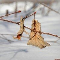 Суха теория, мой друг, а древо жизни вновь зазеленеет!:) :: Андрей Заломленков
