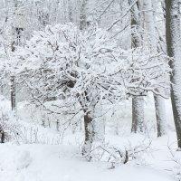 Зима :: Алина Сержантова