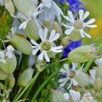 Мир удивительных растений :: Валентина Пирогова