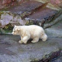 трехмесячный малыш - медвежонок :: Татьяна Ларионова