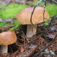 грибы :: Димончик