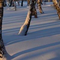 Снег и солнце !!!! :: Виталий Россия