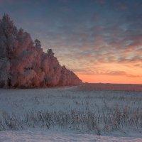 Розовая безмятежность... :: Владимир Пименов