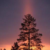 Природная подсветка :: Виталий Россия