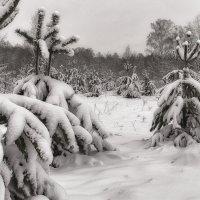После снегопада. :: Андрий Майковский