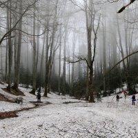 В туман :: Александр Пиленгас