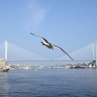 На фоне моста :: Юрий