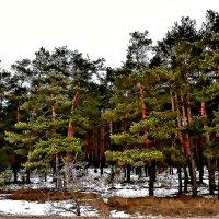 Проталины в лесу. :: Михаил Столяров