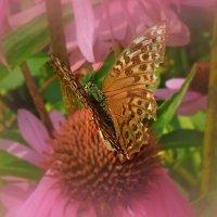 Бабочка на цветке :: Попкова Александра