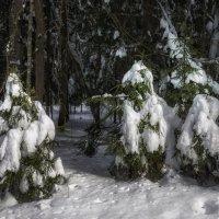 Новогодние хозяйки в естественной среде обитания . :: Va-Dim ...