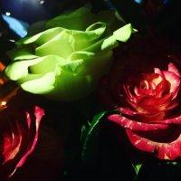 розы спрятались во тьме. :: Уля Машникова