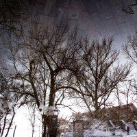 И я плыву по зеркалам... :: Tanja Gerster