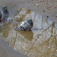 Давайте же мыться, плескаться, купаться,  ... :: Андрей Лукьянов