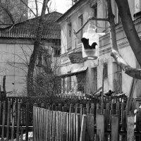----------- :: Галина Щербакова