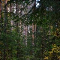 Где-то в глухом лесу :: Алексей (GraAl)