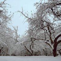 Яблоневый сад зимой :: Денис Масленников