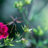 По пути в цветочный рай :: Владимир Шамота