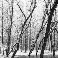 Из прошлой зимы :: Genych Bartkus