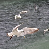 голодные чайки :: Антонина Владимировна Завальнюк