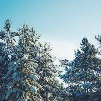 Зимний пейзаж :: Elena Wise