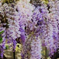 цветы.весна :: Ариэль Volodkova