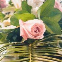 Rose :: Яна Васильева