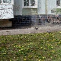 Настоящая весна под моими окнами :: Нина Корешкова