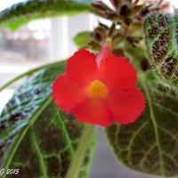 Аленький цветочек :: OLLES