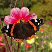 Среди цветочной красоты все исполняются мечты :: SELENA4950