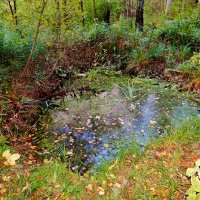 Осеннее болотце в Московской области :: Валентина Пирогова