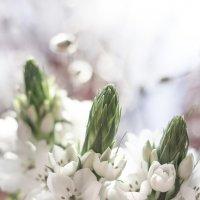 В светлый праздник! :: Bosanat