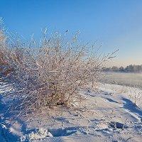 Морозный полдень :: Анатолий Иргл
