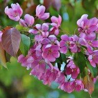 Майское цветение :: Natali Positive