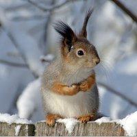 У вас лишнего орешка не найдется? :: Вячеслав Минаев