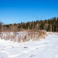 Замерзшая река :: Владимир Деньгуб