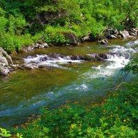 У таёжной реки :: Сергей Чиняев