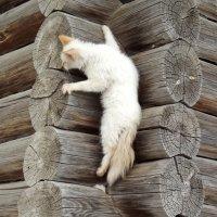 Собаки не видать? :: Светлана Рябова-Шатунова