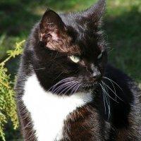 Дворовой кот :: Татьяна Ларионова