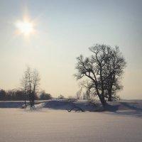 Зимний пейзаж.. :: Алексей Макшаков