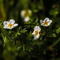 Летние цветы :: Павел