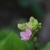 Весна :: Виолетта