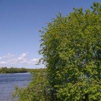 На берегу реки :: lady v.ekaterina
