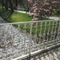Весна цветущая... :: Mariya laimite