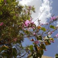 Апрельское цветение. :: Жанна Викторовна