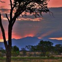 Близится ночь в Танзании :: Александр Бойченко